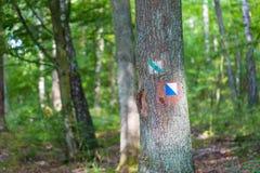 Отстаньте знак покрашенный на коре дерева в лесе летнего времени Стоковые Изображения RF
