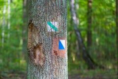 Отстаньте знак покрашенный на коре дерева в лесе летнего времени Стоковое фото RF