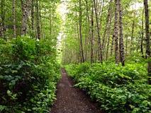 отстаньте лесистое Стоковое фото RF