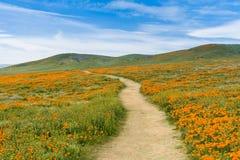 Отстаньте на холмах запаса мака Калифорнии долины антилопы во время зацветая времени Стоковое Изображение