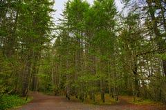 Отстаньте с листвой леса в острове ванкувер, ДО РОЖДЕСТВА ХРИСТОВА, Канада Стоковое Изображение RF