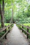 Отстаньте через древесины с деревянными рельсами и путем стоковые изображения rf