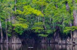 Отступление Cypress озера Parker стоковое изображение rf