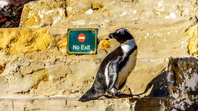 Отсутствие вход или выход для пингвинов? Стоковые Фото