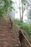 Отсутствие дерева отсутствие жизни Стоковые Изображения RF