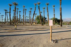 Отсутствие знака автостоянки с пальмами и голубым небом стоковые фотографии rf