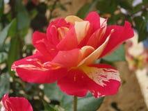 Отсутствие съемки цветка фильтра Стоковые Изображения RF