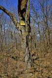отсутствие trespassing знака Стоковая Фотография