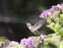 отсутствующая муха Стоковые Фото