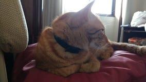 отсутствующий смотреть кота Стоковая Фотография