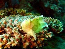 оттенок света лягушки рыб Стоковая Фотография RF