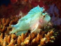 оттенок света лягушки рыб Стоковые Изображения