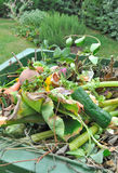 Отходы зеленого цвета Стоковая Фотография