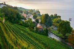 От виноградины к озеру Стоковая Фотография RF