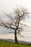 Отдельное дерево стоковые фотографии rf