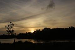От за деревьев Стоковая Фотография RF