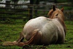 От задней лошади фото стоковые фото