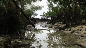 Отлив в пляже Стоковые Изображения