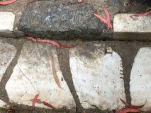 От камня фигурной стрижки кустов надгробной плиты кладбища вымощая, 36 Стоковое Изображение