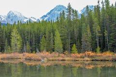 От обочины, парк долины брызга захолустный, Альберта, Канада Стоковое Изображение RF