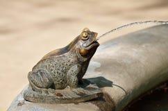 От рта лягушки вода пропускает Стоковые Фотографии RF