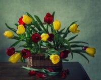 От серии к весне Стоковое Фото