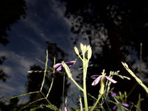 От темноты что-то было увидено Стоковые Фото