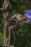 отдыхать бабочки Стоковая Фотография RF