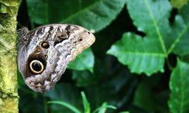 отдыхать бабочки Стоковое Изображение