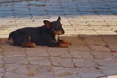 Отдыхать бездомной собаки Стоковые Изображения