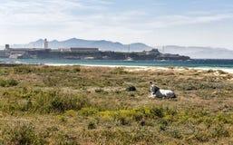 Отдыхать белой лошади Стоковое Фото