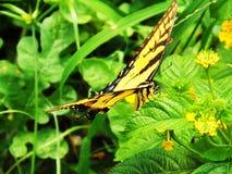 отдыхать листьев бабочки стоковое изображение rf