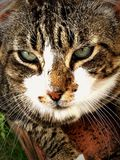 отдыхать кота Стоковые Фото