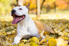 Отдыхать собаки Стоковые Изображения RF