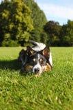отдыхать травы собаки Стоковое Фото