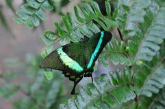 Отдыхая бабочка Стоковые Изображения