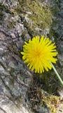 Отдыхая желтый цвет Стоковые Изображения RF