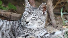 Отдыхая конец-Вверх кота сток-видео