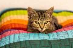 Отдыхая котенок стоковые изображения
