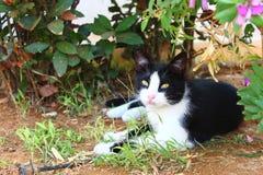 Отдыхая кот в Греции Стоковые Фото