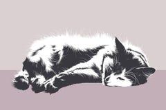 Отдыхая кот Стоковое Изображение RF