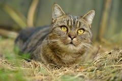 Отдыхая домашняя кошка Стоковое Изображение