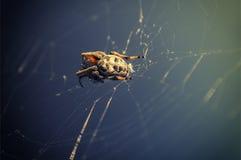 Отдыхая паук Стоковые Изображения