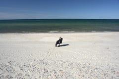 офис пляжа Стоковые Фотографии RF