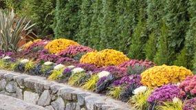 Официально граница сада падения с хризантемами стоковое фото rf