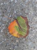 Официальные цвета падения Стоковые Изображения RF