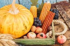 Официальный праздник в США в память первых колонистов Массачусетса: Поднос различных овощей осени Стоковая Фотография