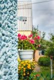 Оформление вне дома, розовые гераниумы в вися цветочном горшке на стене дома стоковые фотографии rf