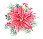 Оформление рождества флористическое Иллюстрация watercolour чертежа руки ботаническая бесплатная иллюстрация