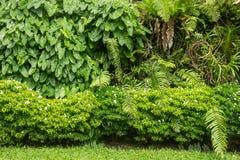 Оформление сада зеленого растения стоковые фотографии rf